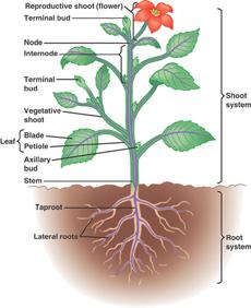 Survival Skills - Gardening and Farming